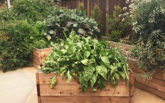 garden plantings boxes