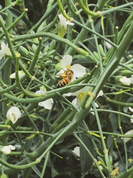 garden still life bee