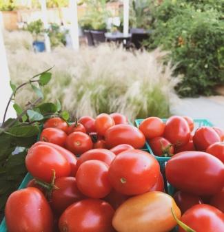 garden still life cherry tomatoes